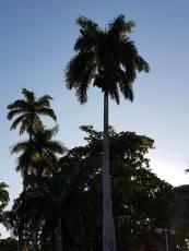 Circuito Ilha Carioca (59)